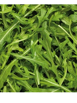 Rocket Salad Loose Leaf Certified Organic Approx 100g