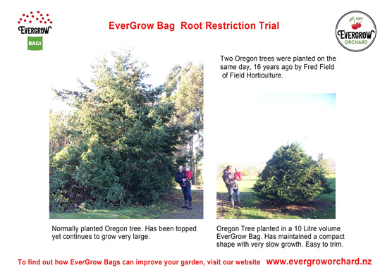Root restriction trial 16 year old Oregon Trees in EverGrow Bags