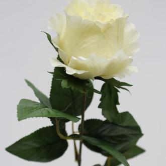 Rose Baroness Single stem1079-82