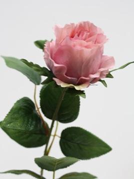 Rose Baroness Single stem1079-88