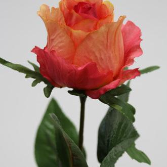 Rose Baroness Single stem1080