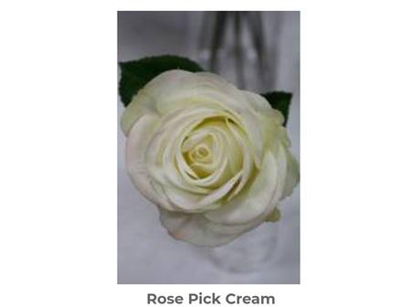 Rose Pick Cream