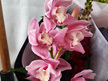 Royal Oak Florist Flowerise orchid stems