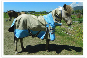 Rugs and covers for  miniature and small horses
