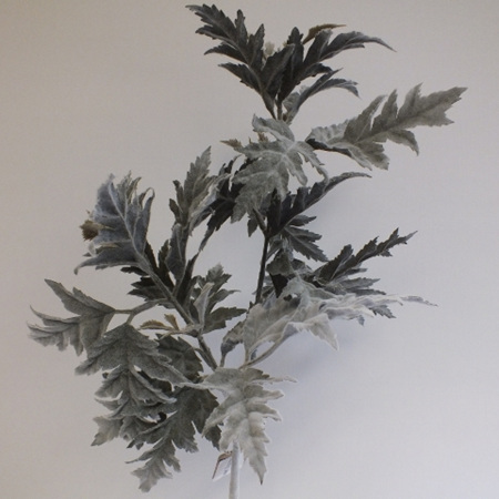 Sea Holly leaf spray 4437