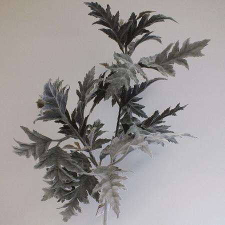 Sea Holly leaf spray 4437