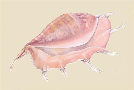 'sea shell 1' card