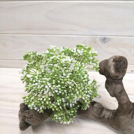 Seed Posy White 4261