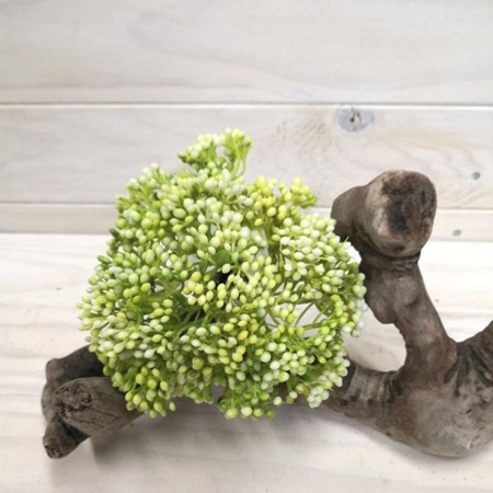 Seed Posy white green 4262