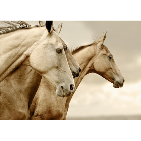 Sepia Horses Decoupage Paper by Mint