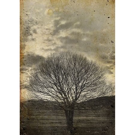 Sepia Tree Decoupage Paper by Mint