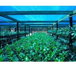 Shade Cloth 50% 2m x 50m Green