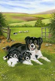 Sheep Dog and Pups Tea Towel