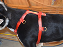 Sheep DogTraining  Harness