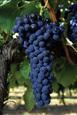 Home Winemaking Advice