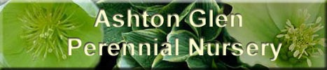 Ashton Glen Perennial Nursery