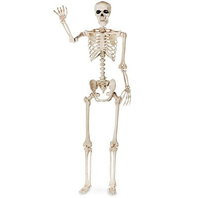 Lifesize 5ft Skeleton
