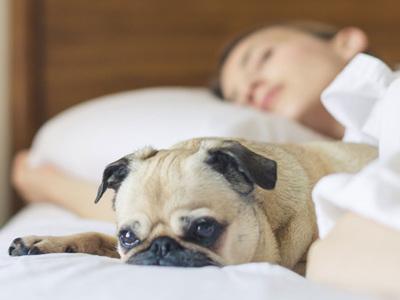 Sleep & Stress Relief