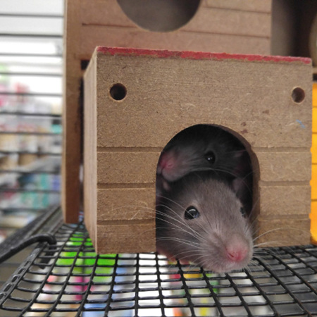 Small Animal Housing and Accessories