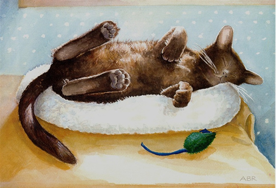Small Burmese cat asleep in sun with catnip mouse