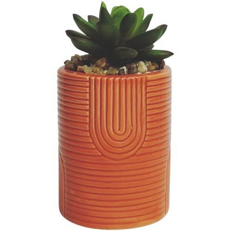Small Succulent in Coral Pot