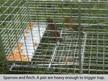 sparrow trap