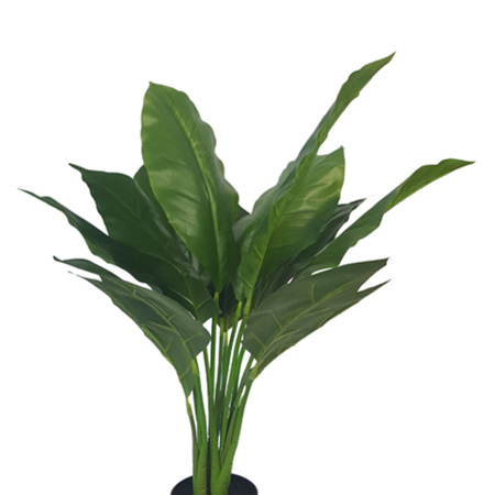 Spathiphyllum Potted 4502