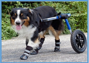 Special needs & products for injured pets