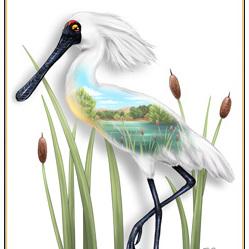 Spoonbill Birds Eye View - A4 Print