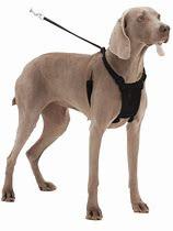 Sporn Comfort Harness