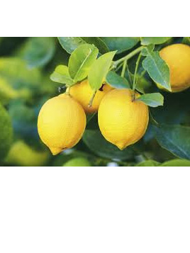 Spray Free Local Juicy Lemons - 500g approx.