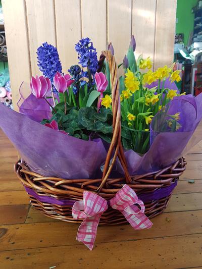 Spring Plant Basket