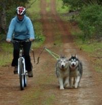 Springer Bike Attachment