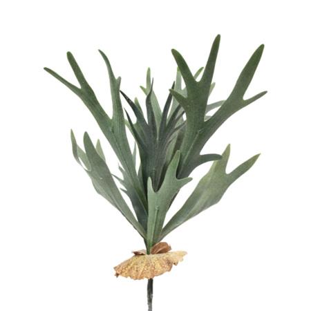 Staghorn Fern 4499