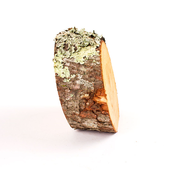 standing pine ring