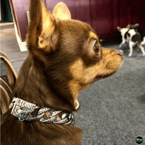Stone Small Stainless Steel Custom Dog Collar by Big Dog Chains