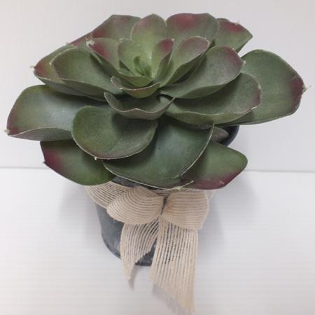 Succulent in a tin 2215