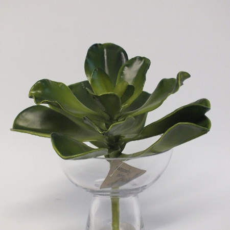 Succulent Xtra Large 1419