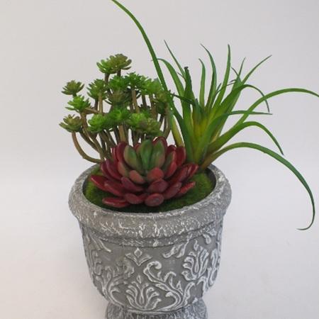 Succulents in a grey concrete urn 2147