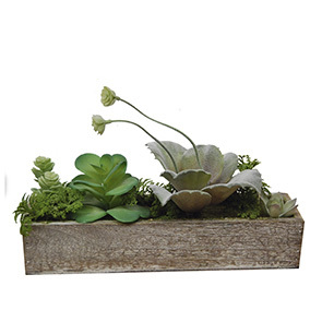 Succulents in a wooden tray  4011