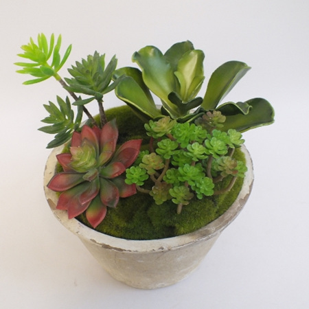 Succulents in whitestone container  2146