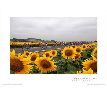 Sunflowers - 2005 Tour de France