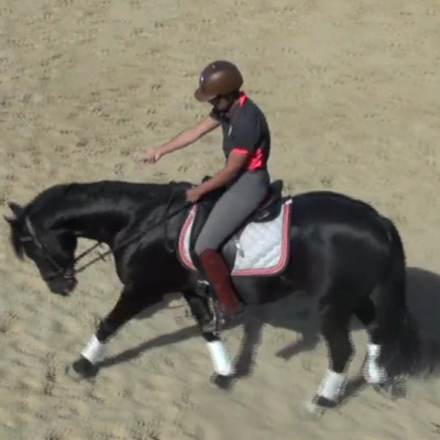 Suppleness in the Horse