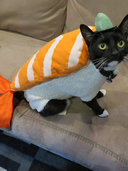 Sushi Costume for Cats