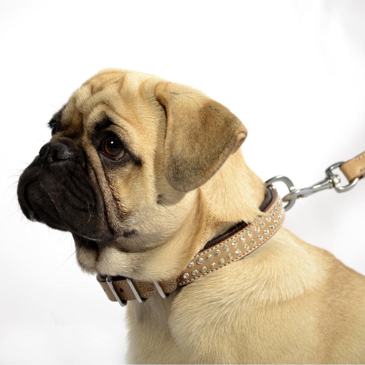 Tough Stuff Dog Collars