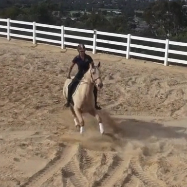 The Evasive Horse and How to Fix it