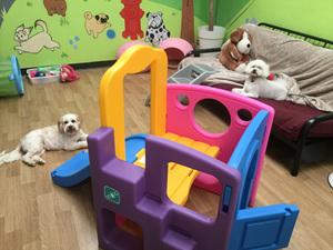 The Little Dog Lounge Kapiti