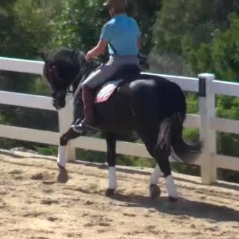 The Rushing Horse