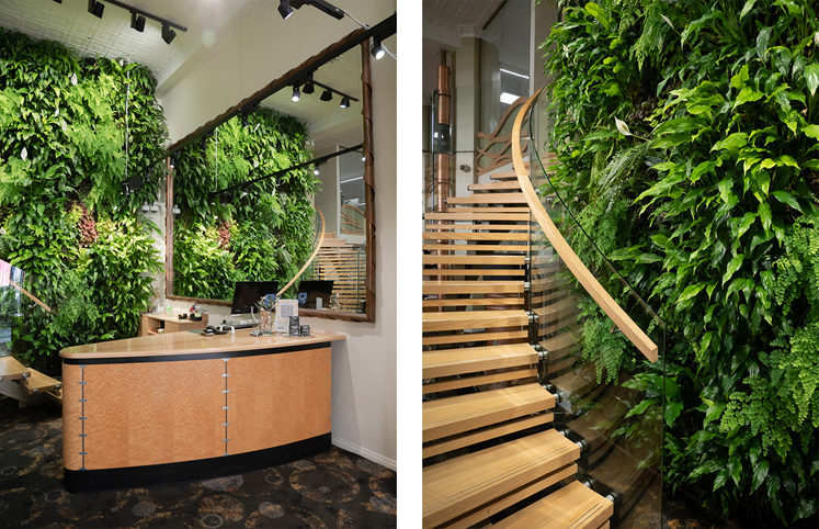 The Village Goldsmith Living Wall Green Plants Jewellery Showroom Wellington