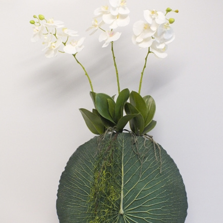 Three Phalaenopsis in a Lotus Leaf Vase 2154